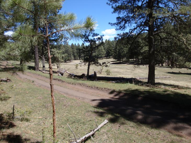 Pics from our ride in Cloudcroft, NM-dsc00474.jpg