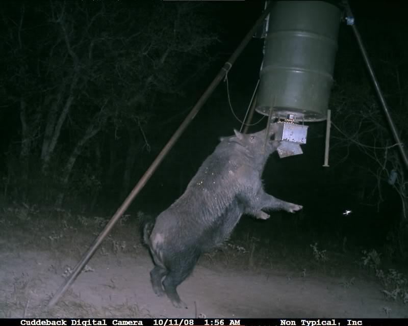 Click image for larger versionName:vandal.jpgViews:67366Size:47.4 KBID ... Scary Deer Cam Pictures